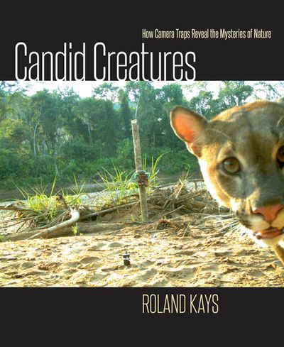 Buy Candid Creatures at Amazon
