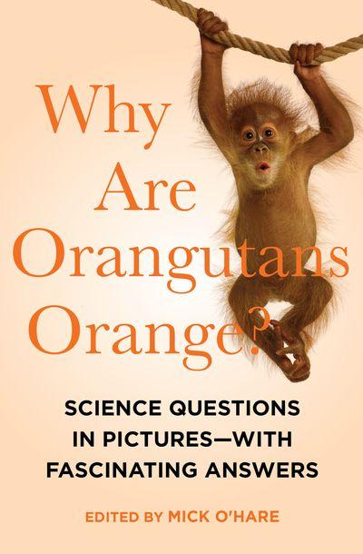 Why Are Orangutans Orange?